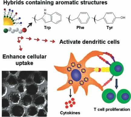 多肽—金纳米复合材料的免疫反应取于氨基酸的结构